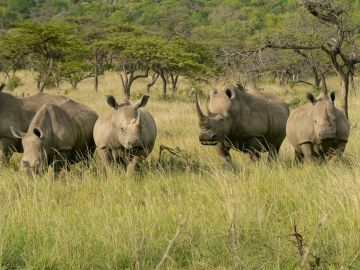 Südafrika Safari Rundreise