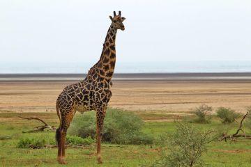 tansania lodges