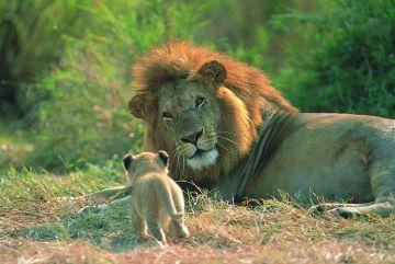 Tansania Kinder Safari