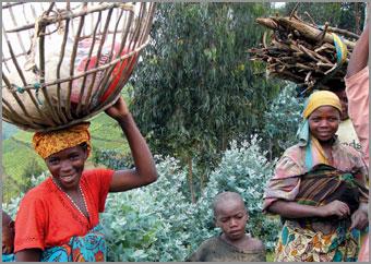 Uganda Ruanda Reisen Safaris Gorilla Trekking