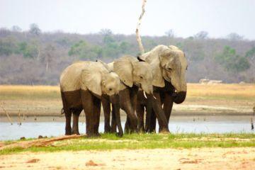 Sambia Elefanten Iwanowskis Reisen - afrika.de