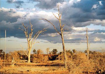 Sambia South Luangwa NP Landschaft Iwaniwskis Reisen - afrika.de