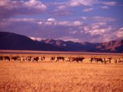 namibia gästefarmen