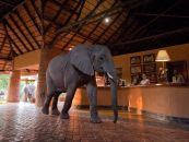 sambia south luangwa mfuwe lodge 2 - afrika.de