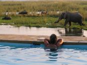 sambia lower zambezi potato bush camp swimming pool - afrika.de